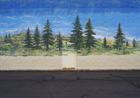 Painted Pines